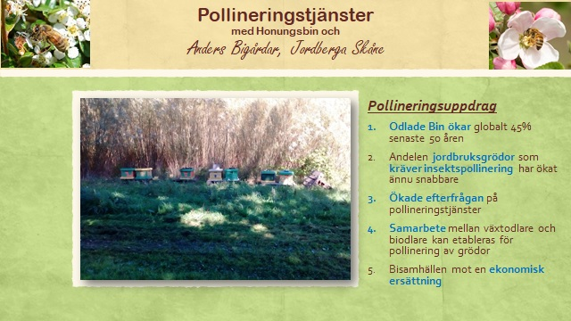 Pollineringstjanster med Honungsbin och Anders Bigardar, Jordberga Skane